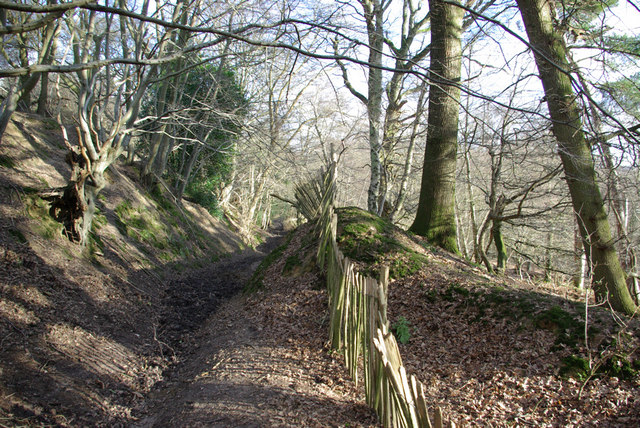 Bridleway, Highams Wood