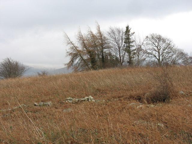 Bryn Rhedyn - Bracken Hill