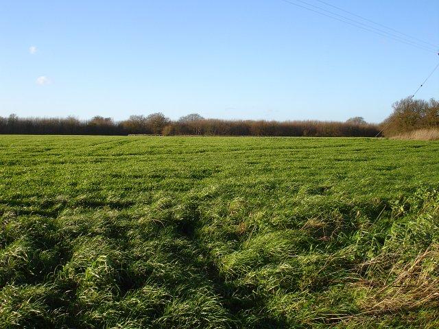 Hay crop?