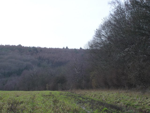 Ashmore Wood