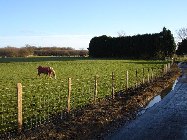 Paddock, Court Farm
