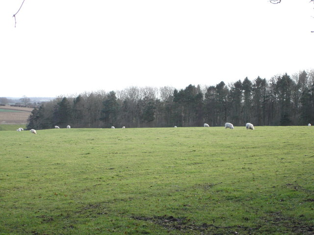 Sheep grazing in front of Ashmore Plantation