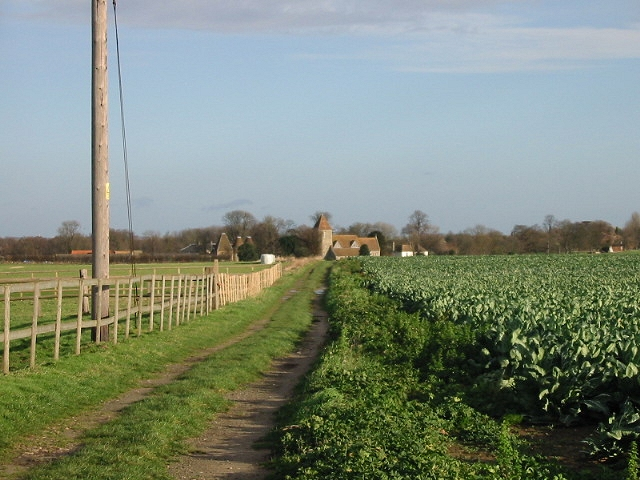 View of cauliflower field and footpath to Preston from Deerson Lane.