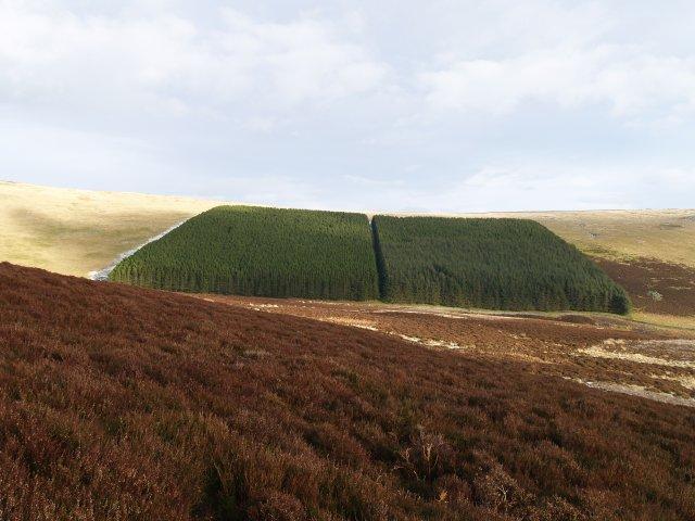 Plantation, Ferniehirst Hill