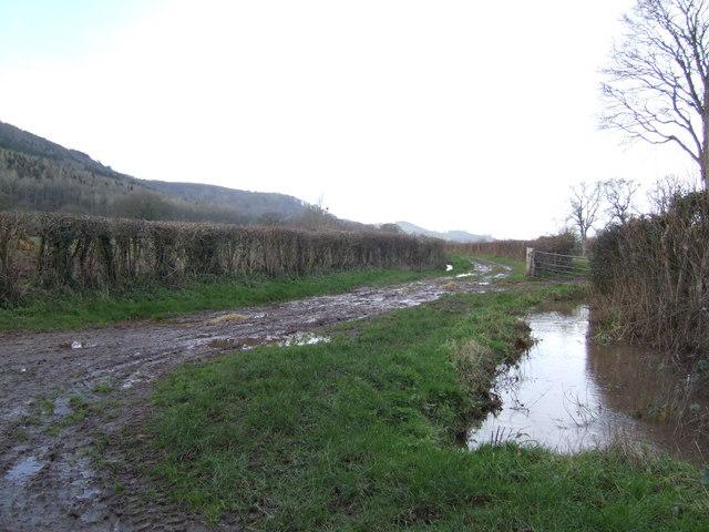 Muddy track near Blakemere