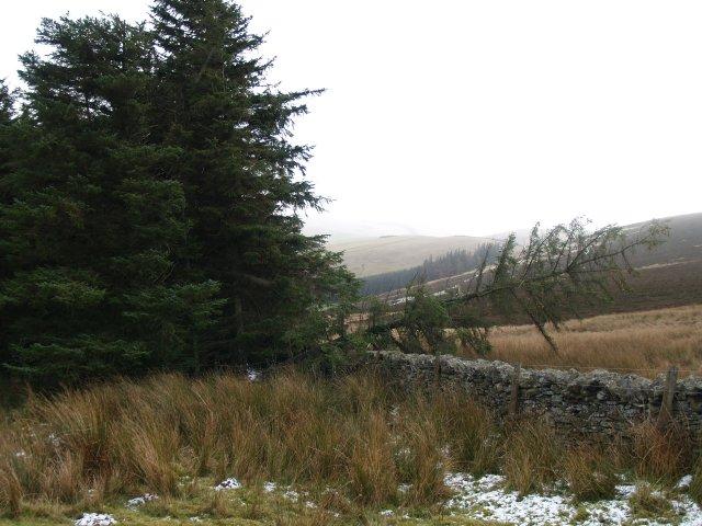 Fallen tree, Ferniehirst Hill.
