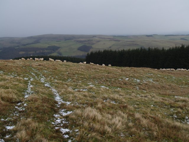 Sheep and rough grazing, Ferniehirst Hill.