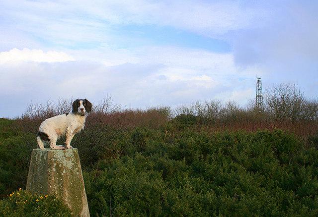 Triangulation Pillar on Windyheads Hill.