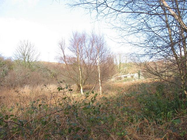Bryn Ffynnon - an abandoned homestead