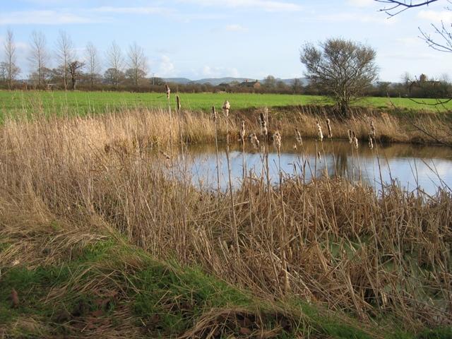 Pond at Hatton Heath