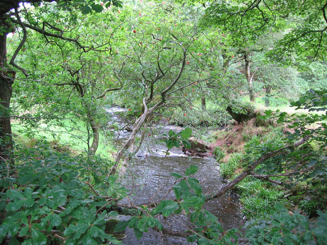 View up Black Brook from footbridge