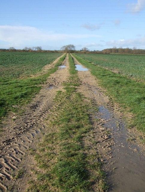 Muddy track through fields near Cheddington
