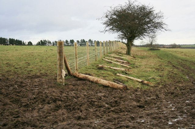 New Fencing, Ox Pasture Lane