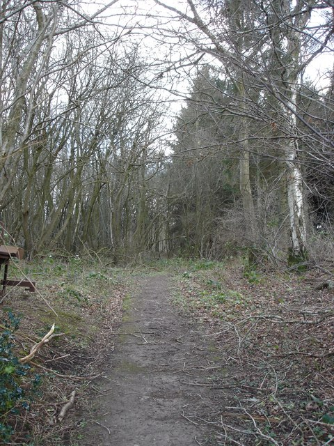 Into Berry Wood