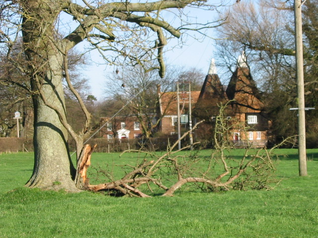 Storm damaged tree and oast house, Littlebourne.