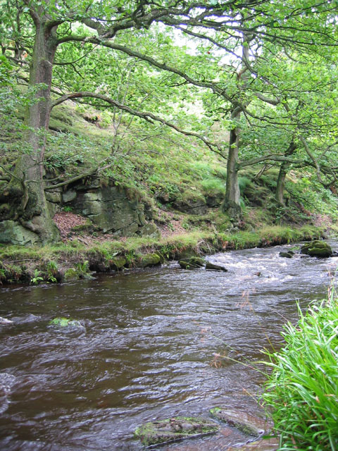Beeches by the River Dane