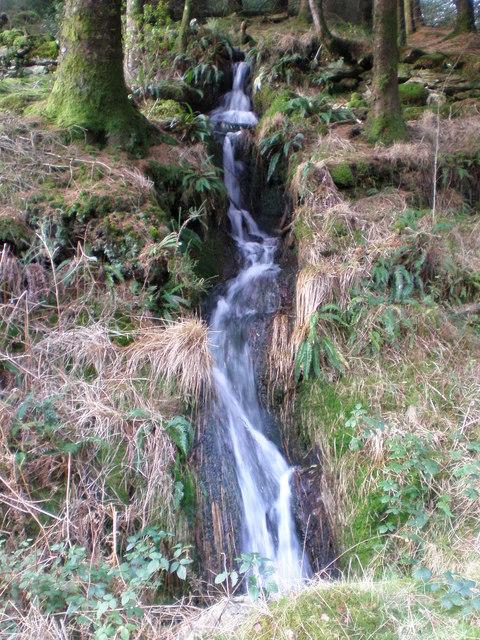 Tumbling forest stream.