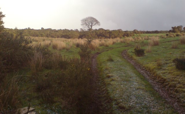 Farm track near the top of Mynydd Drumau