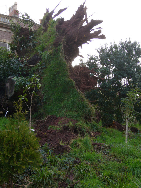 Storm Tree Fallen