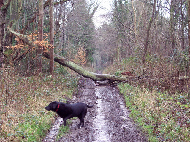 Storm Damage in the Harewarren