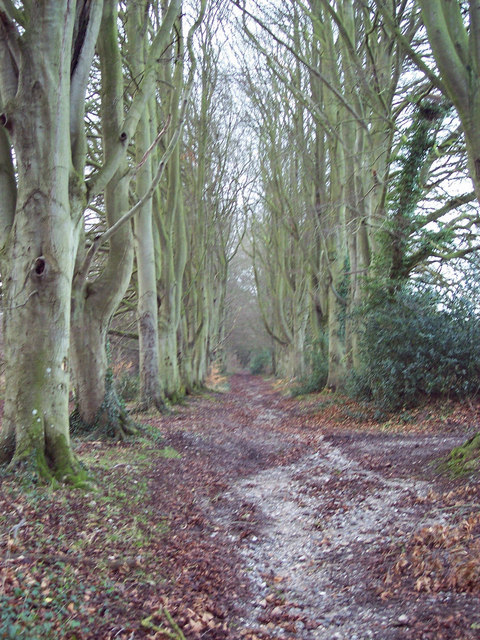 Bridleway from Burcombe to the Old Shaston Drove