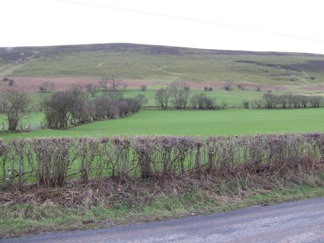 East flank of Mynydd Troed