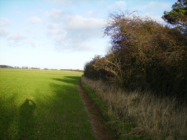 Field margin above Nettledale