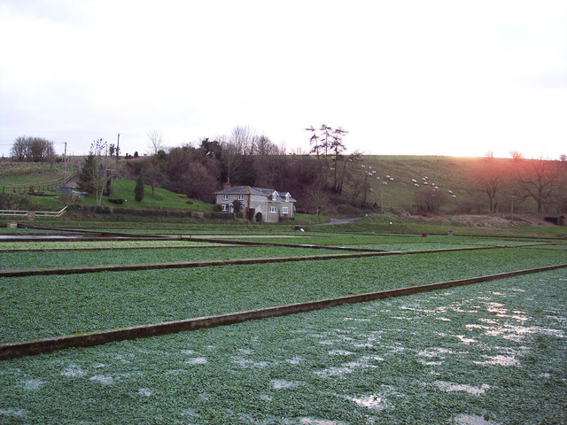 View of the Watercress Beds towards Little London