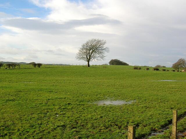 Field Beside Burnhouse Road