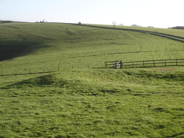 Field boundary on Charlton Down