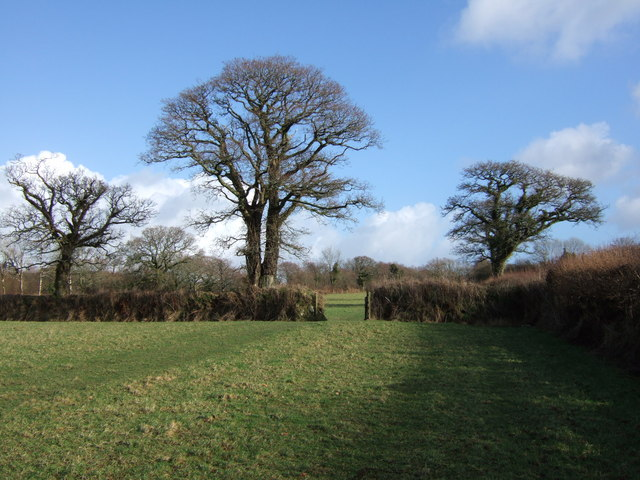 Trees on Sourton Footpath 2