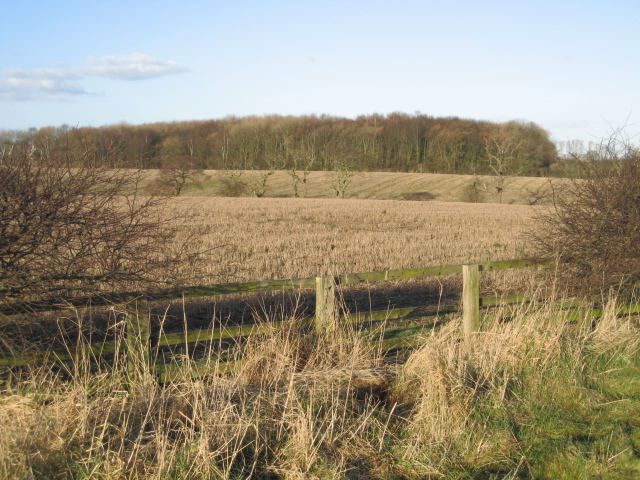 Fields and woods