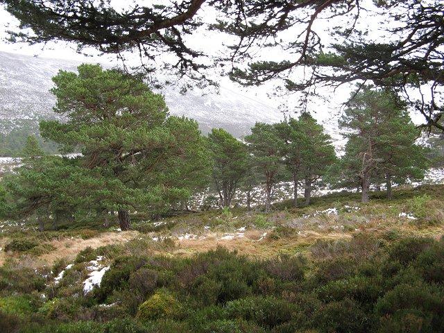 Forest, Allt nan Cùileach