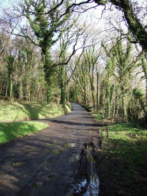 Lane below Beara Down