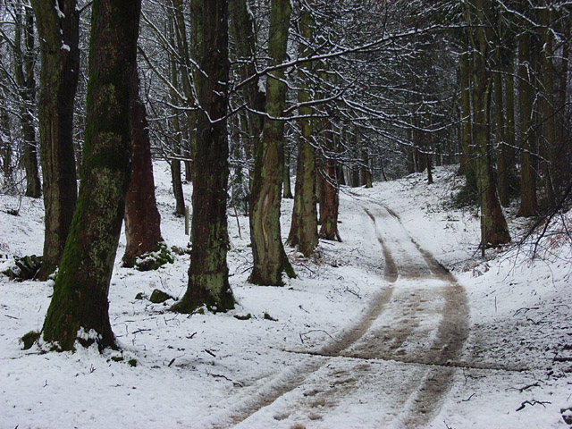 Woodland, Craigforth