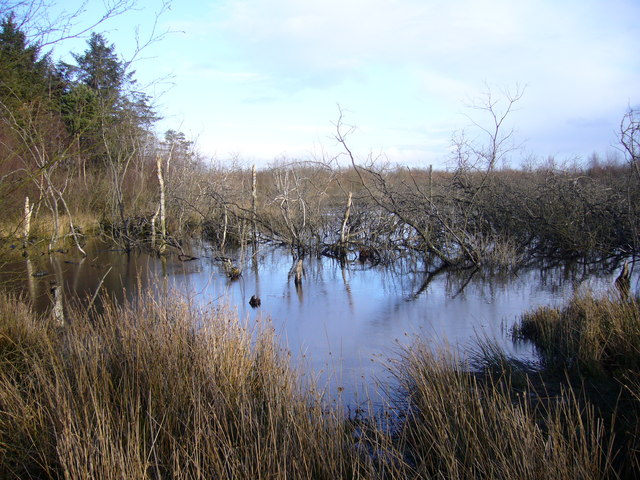 Burnhope Pond Plantation