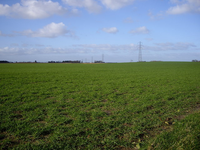 Fields Close to Holbeach Hurn