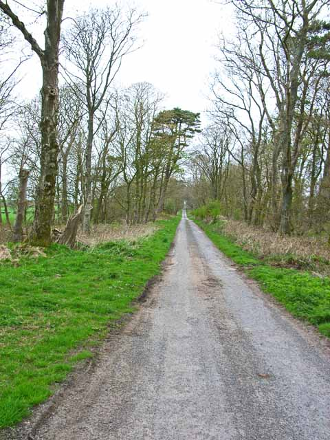 Tree-lined road from Barnultoch to High Barnultoch