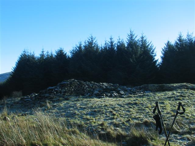 Cairn & Cist in Forest Clearing