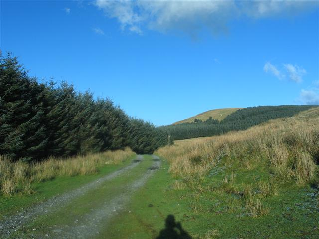 Towards Braich Ddu forest