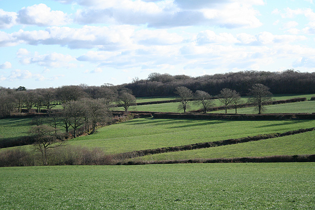 Romansleigh: towards Little Meshaw Moor