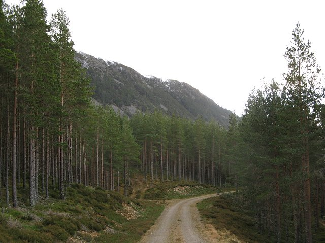 New logging road, Inshriach