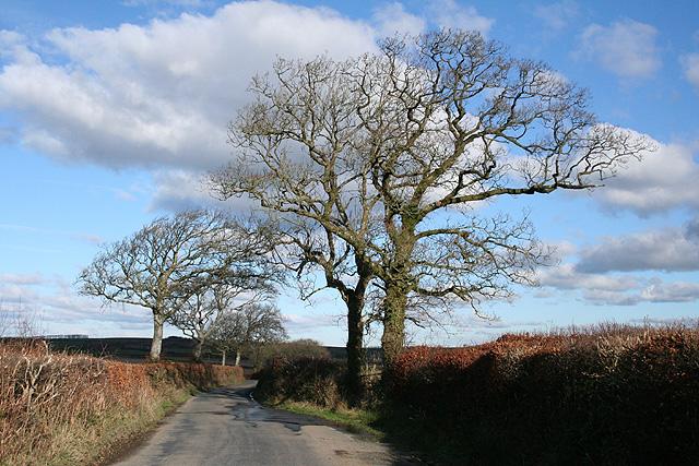 Chulmleigh: the lane to Garland Cross