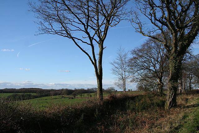 Cheldon: on Mounticombe Moors