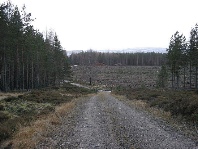 Felled area, Inshriach Forest