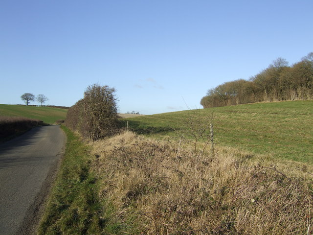 Lane, field and wood