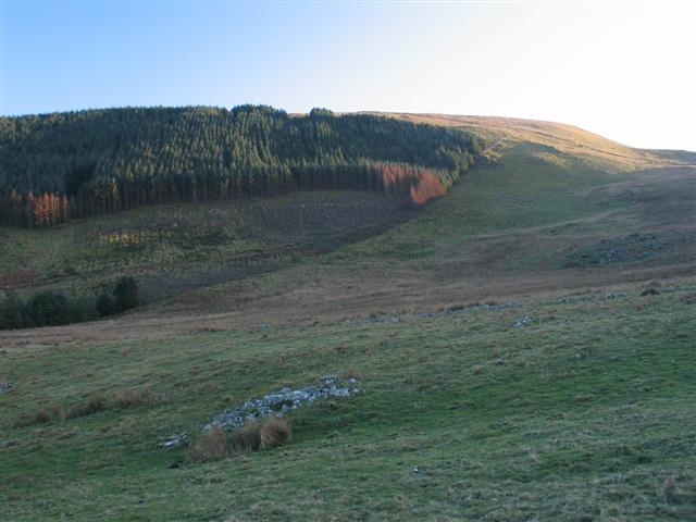 Deforestation on the slopes of Pen y Garn