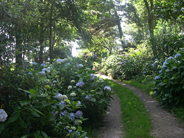 Hydrangea Path in St Loy
