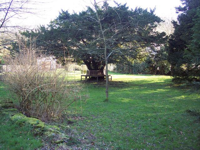 Yew Tree, Swallowcliffe