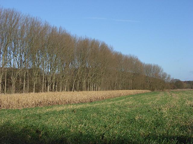 Farmland, Sonning Eye